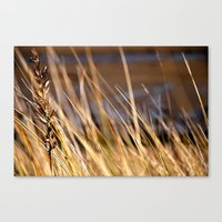 Into the dunes Canvas Print