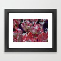 Candy Parrot Tulips Framed Art Print
