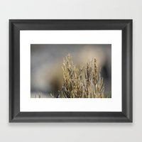Tiny Plants Framed Art Print