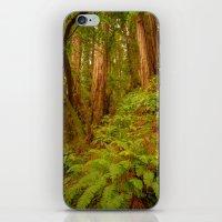 Redwoods Regional II iPhone & iPod Skin