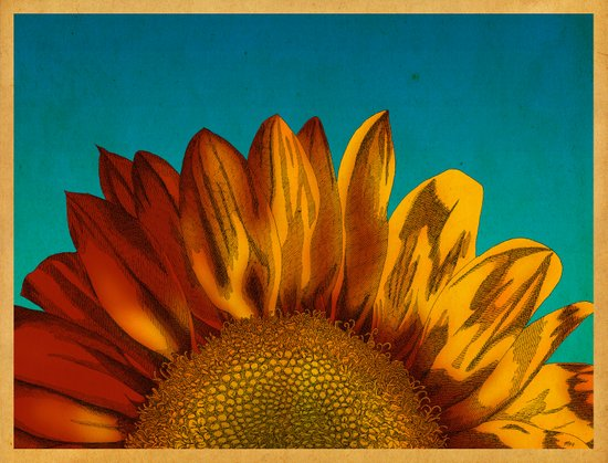 A Sunflower Art Print