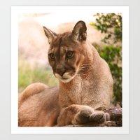 The Cougar Art Print