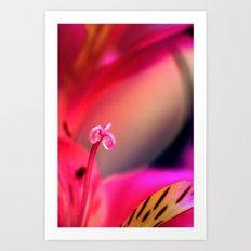 Myriad of Colours Art Print