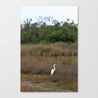 Swamp Song Canvas Print