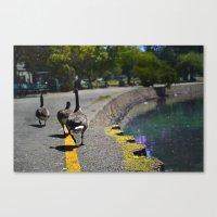Lake Merrit Geese Canvas Print
