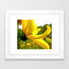 Goldie Locks Framed Art Print