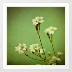 Florets in May Art Print