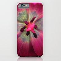 Up Close Purple Tulip iPhone 6 Slim Case