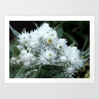 White Straw Flower Art Print