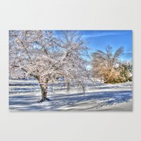 After Ice Storm Canvas Print