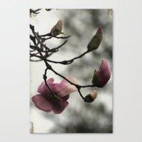 Pale Pink Blooms Canvas Print