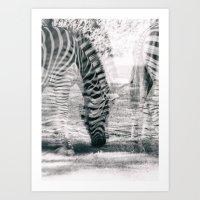 Zebre na trati. Art Print