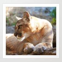 Puma 3 Art Print