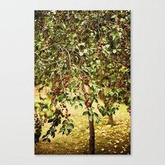 Cherry tree Canvas Print