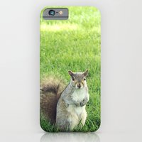 iPhone & iPod Case featuring A Squirrel Life in Boston by Yolene Dabreteau Photography