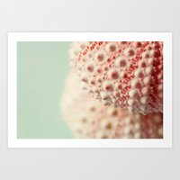 Sea Urchin Series No 3 Art Print