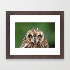 Boreal Owl Framed Art Print