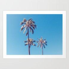 palm tree ver.sunny day Art Print