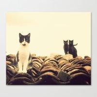 gatos en el tejado Canvas Print