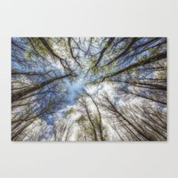 Looking up to the sky Canvas Print
