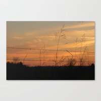 barbwire Canvas Print