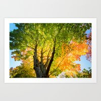 Blushing Fall Art Print