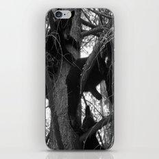 Berry Beary iPhone & iPod Skin