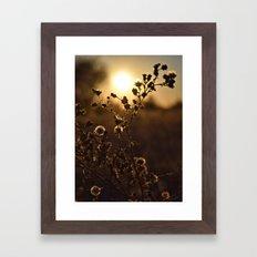Last Warmth Framed Art Print