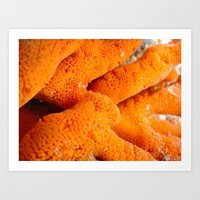 Dying Coral Art Print