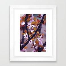 Cherry Blossom 2 Framed Art Print