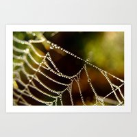 Droplets on a Web Art Print