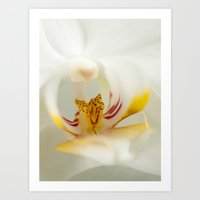 Looking into the Orchid Art Print
