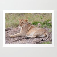 Lioness Art Print