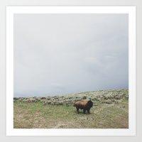 Hillside Bison Art Print