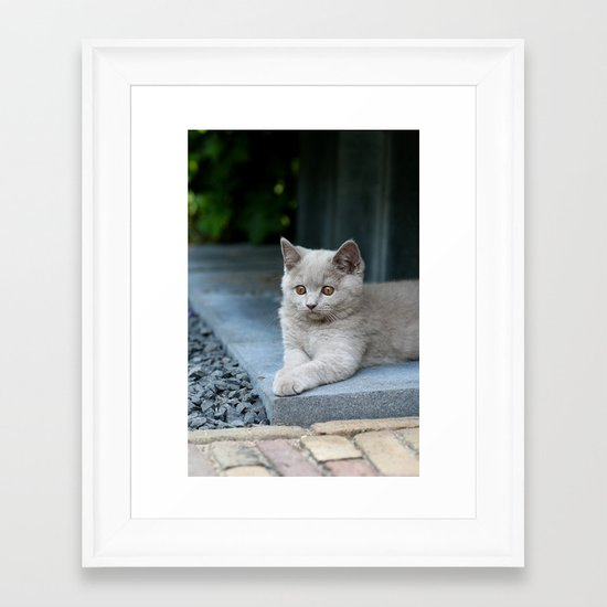 Bikkel the cat ! Framed Art Print