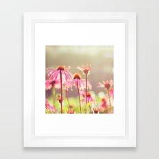 Sun Kiss Daisies Framed Art Print