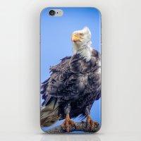 Eagle in Breeze iPhone & iPod Skin