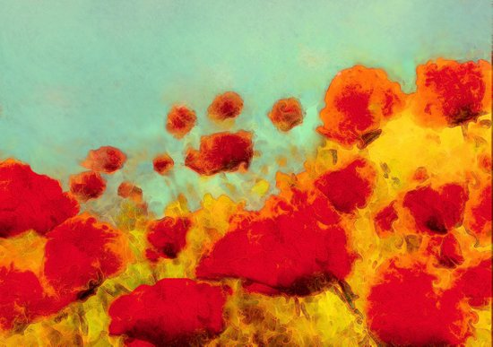 FLOWERS - Poppy time Canvas Print