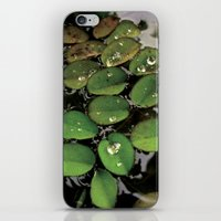 Mini Water Lilies And Wa… iPhone & iPod Skin