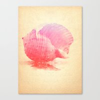 Pink Seashell Canvas Print
