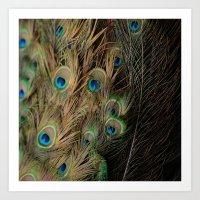 Peacock #1 Art Print