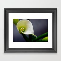 Lily Calla - ONE Framed Art Print