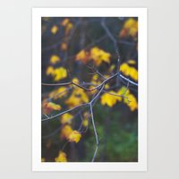 Fall Of Yellow  Art Print