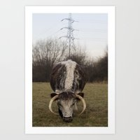 Cow, London Art Print