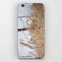 Grass iPhone & iPod Skin