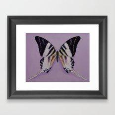 Giant Swordtail Butterfly Framed Art Print