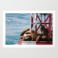 sea lion buoy Art Print