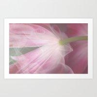 Delicate pink tulip Art Print