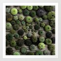 Urchins Art Print