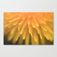 Sunshine#2 Canvas Print